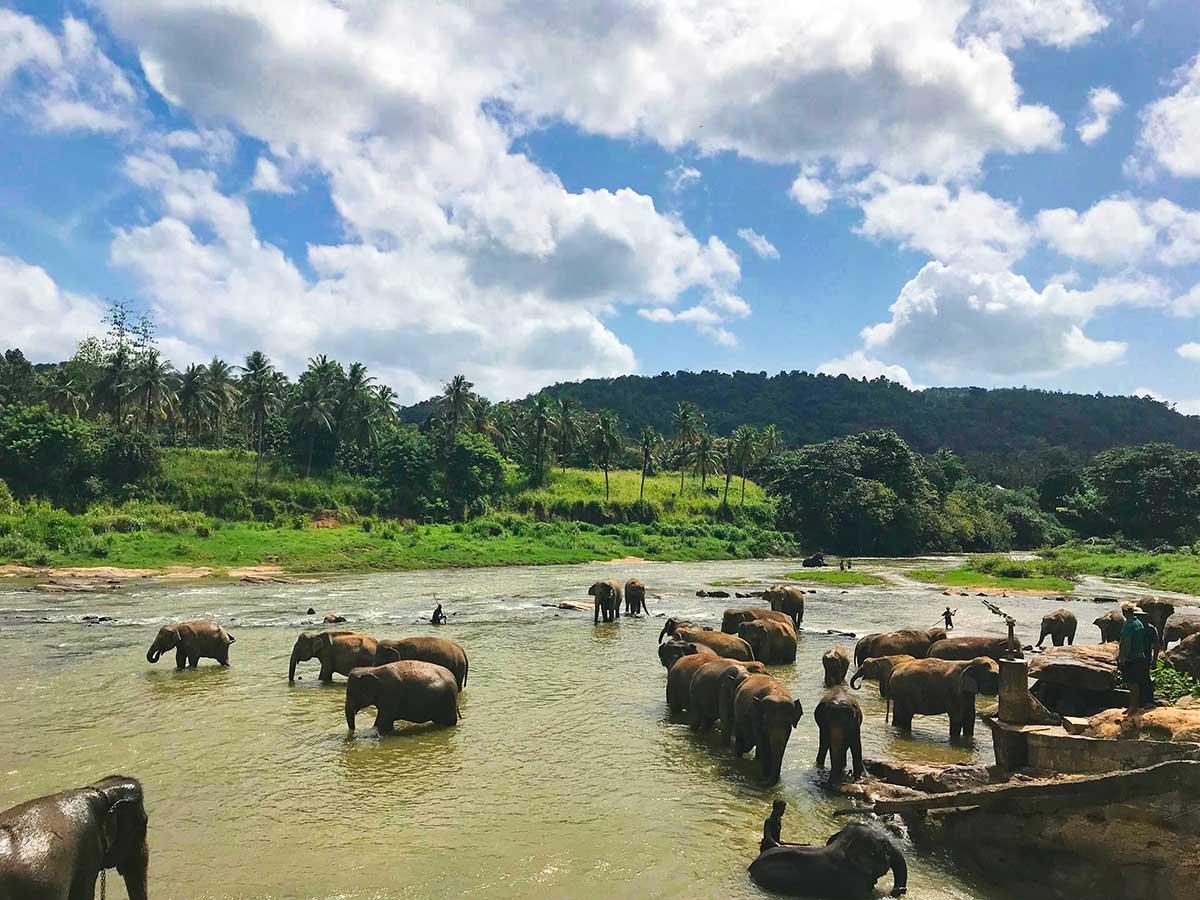 71100-To-Elephant-Bathing-Position,-Rambukkana,-Sri-Lanka