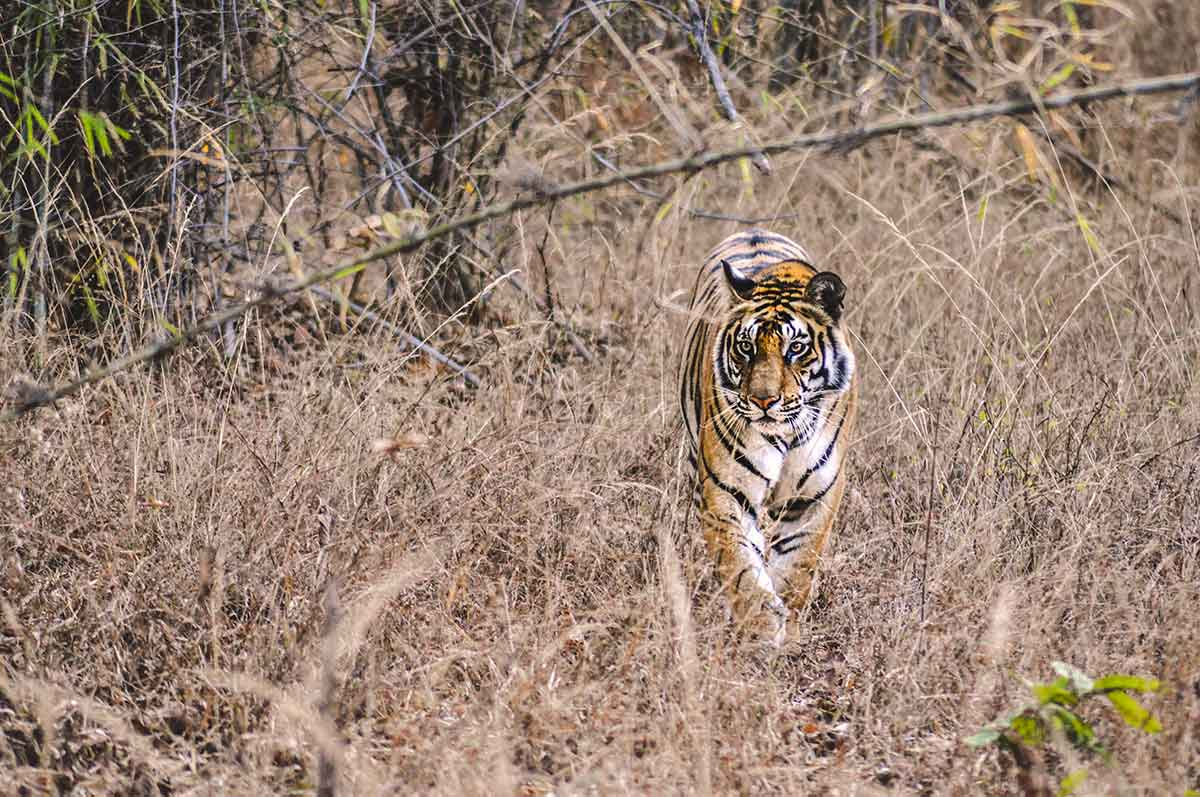 Bandhavgarh-National-Park,-India