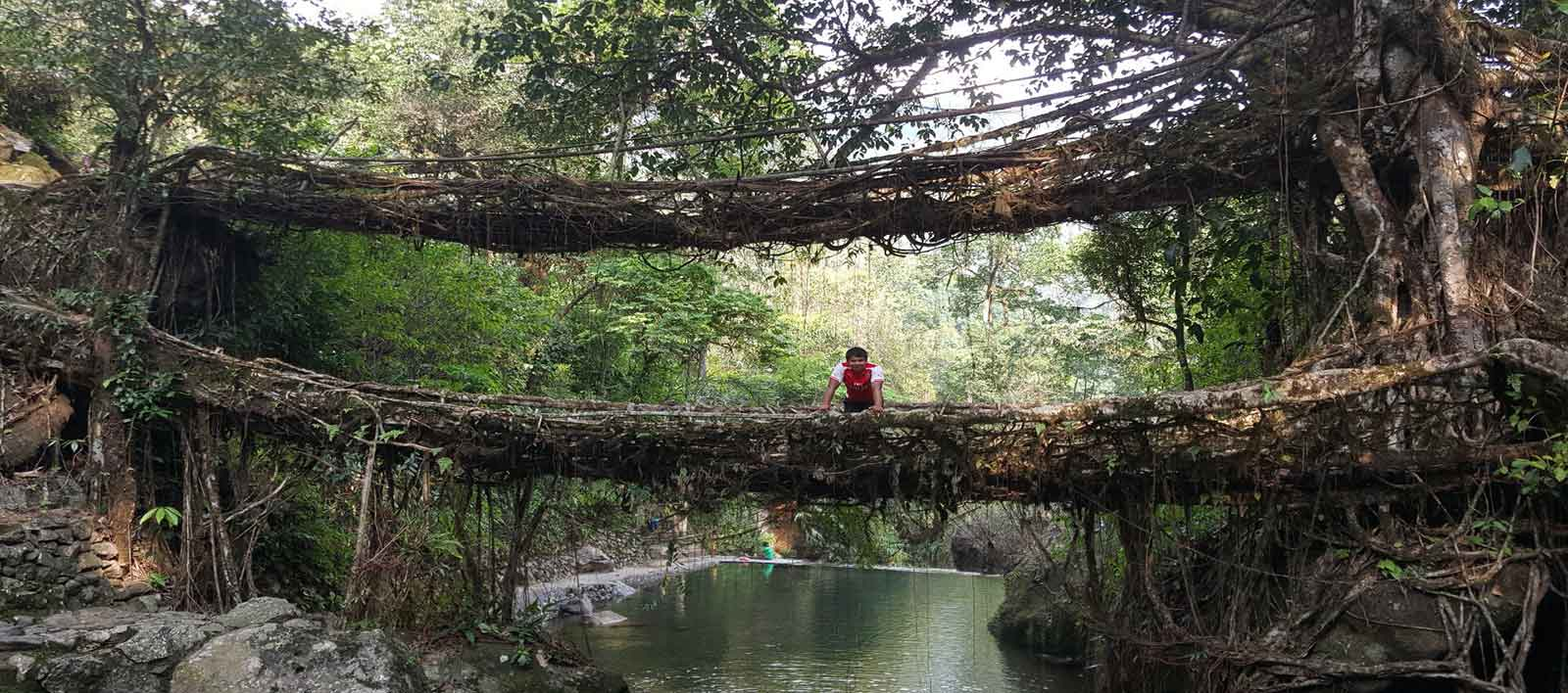 Living-Root-Bridge-of-Meghalaya