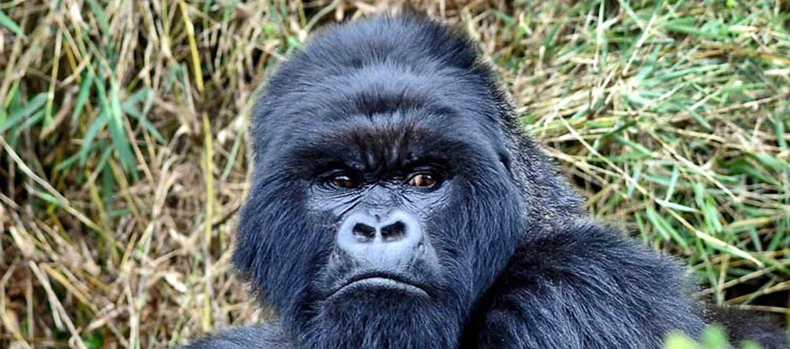 safari-in-Rwanda