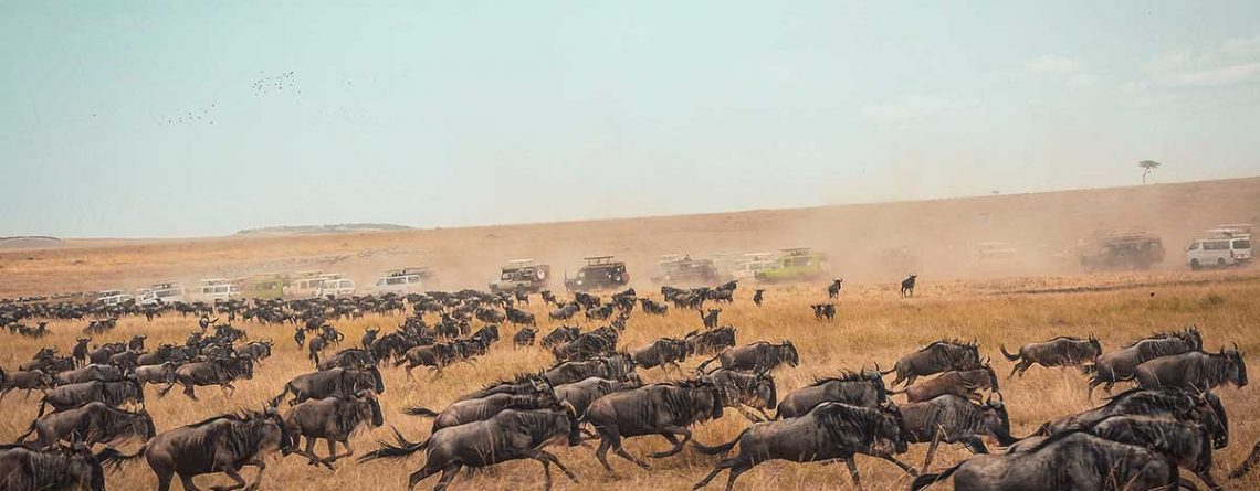 the-great-migration---Masai-Mara-National-Reserve,-Kenya