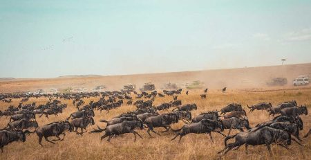 the-great-migration---Masai-Mara-National-Reserve,-Kenya