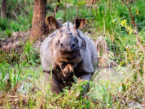 kaziranga-national-park